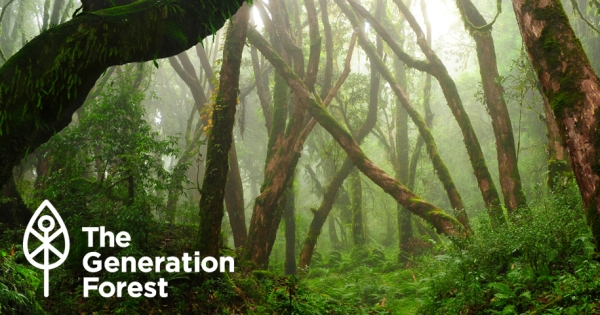 The Generation Forest